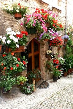Flowers in Spello, Perugia, Italy