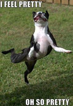 Funny I Feel Pretty Oh So Pretty Dog