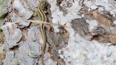 Reptilien müssen umgesiedelt werden: Eidechsen bremsen Stuttgart-21-Bau