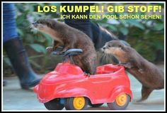 36 Funny and Cute Animal Pictures Otters Cute, Baby Otters, Otters Funny, Cute Funny Animals, Funny Cute, Cute Animal Pictures, Funny Pictures, Animals And Pets, Baby Animals