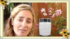 Cómo hacer leche de alpiste para adelgazar, bajar el colesterol, diabete...