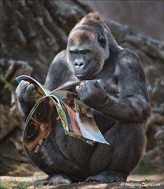 Gorilla reading a nature magazine. Priceless.