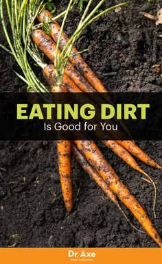 The Health Benefits of Eating Soil Based Organisms. Leaky Gut may be at the root of your disease. Learn more in the book Eat Dirt releasing on 3/29/16.