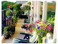 Balcony garden <3