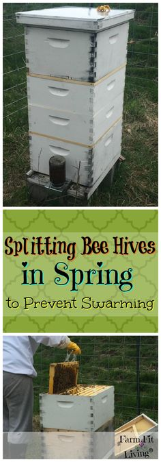 Looking for options for splitting bee hives in Spring? Here's a fool proof and proven way to easily reverse and split busy hives into two.