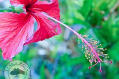 Frame It, Us Images, Life Photography, All Design, New Pictures, Hibiscus, Tropical, In This Moment, Digital