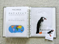Develop Pictures, Ignorance, Homeschooling, Books, Emperor Penguin, Sea Ice, Zoology, Preschool, Libros