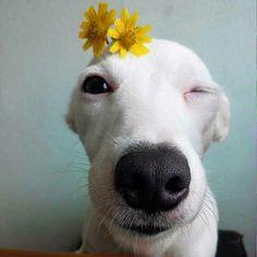 Wink, wink...sweet pup