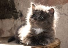 Ruben the kitty  Fine Art Photography by AnneSolfud on Etsy, $17.00