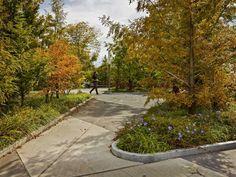 narchitects /// Parc linéaire Ellicott au campus médical de Buffalo Niagara, New York