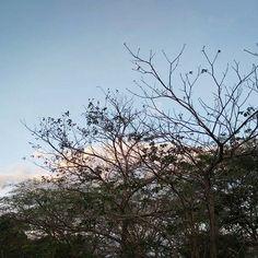 Reposting @unafotografaamateur: #Solomomentos #venezuela #puertoordaz #soypuertoordaz #naturaleza #nature #naturegram #natulovers #love