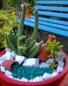 Mini jardim de cactos e suculentas. Criação: Socorro Braga/Teresina-PI