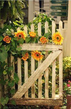 Sunflower cottage fence..Ana Rosa