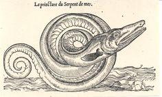 Serpent de mer. Belon, Histoire naturelle des estranges poissons marins.