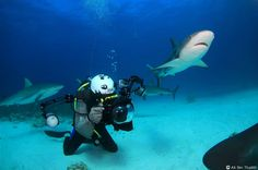 """Sharks off The Bahamas. Sharks - like these in the Bahamas - he says, """"give you a big message that they own that place - it's like a game"""". Jacques Cousteau, Orcas, Underwater Images, Underwater Photographer, Nassau Bahamas, Unusual Animals, Paradise Island, Photo Series, Scuba Diving"""