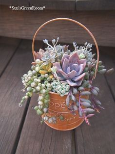 Succulent Display, Succulent Centerpieces, Succulent Arrangements, Succulent Terrarium, Succulents In Containers, Container Flowers, Cacti And Succulents, Planting Succulents, Small Garden Fairies