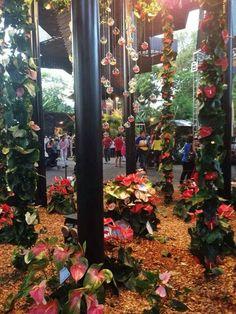 Feria de las flores 2014 Ladder Decor, Zen, Home Decor, Gardens, Colombia, Places To Visit, Sweetie Belle, Paisajes, Homemade Home Decor
