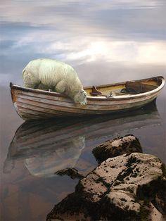 Anja Jager, Boat, sheep, water...