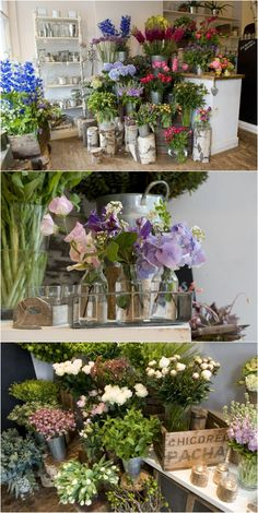 with Fran Bailey of The Fresh Flower Company The Fresh Flower Company Going out to buy some gorgeous buds in myThe Fresh Flower Company Going out to buy some gorgeous buds in my Fresh Flowers, Beautiful Flowers, Exotic Flowers, Purple Flowers, White Flowers, Flower Shop Interiors, Flower Shop Design, Fleur Design, Flowers For Sale