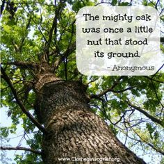 The mighty oak was once a little nut that stood its ground. #Quotes