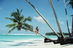 Race you to the top of a coconut tree...