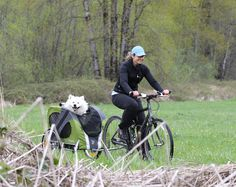 Whee! There goes Mr. Menno (a Samoyed) in his DoggyRide Novel dog bike trailer!