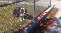 trained the human in 5 secs. Dog Training, Dogs, Animals, Videos, Animaux, Dog Training School, Doggies, Animal, Animales