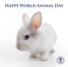 We don't ever test on animals! Feel good about using Neals Yard Remedies, organic & cruelty free!!! https://us.nyrorganic.com/shop/katrinakirby