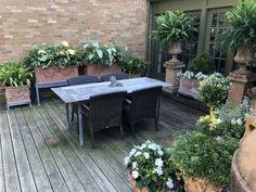 Garden design, pin image 3717403496 for a stunning yard. Bobo Hydrangea, Hydrangea Bloom, Landscape Elements, Landscape Design, Garden Design, Summer Garden, Winter Garden, Climbing Hydrangea, Xmas