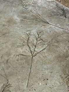 Leaf imprints in concrete