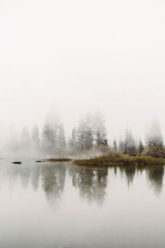Foggy morning /