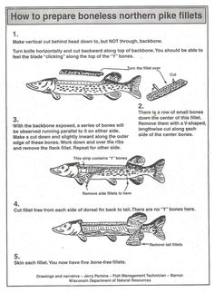 A great way to clean Northern Pike and remove the Y-Bones.