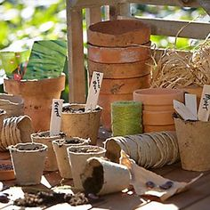 How to sow seeds Vegetable Boxes, Seed Shop, Garden Bulbs, Tree Seeds, Fruit And Veg, Trees To Plant, Natural Materials, Garden Tools, Planter Pots