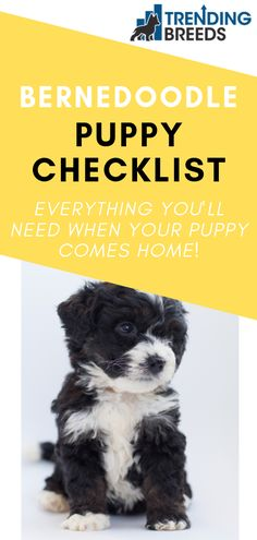 Researching a Bernedoodle puppy or getting one soon? Make sure you have the supplies you need before you bring your pup home. Follow this checklist for everything you need.