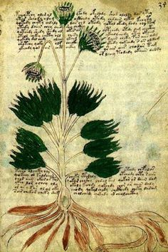 I sure hope someone deciphers the Voynich Manuscript someday. I've tried to…