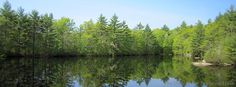 Late spring at Hidden Lake at Camp #Yawgoog!  Image by David R. Brierley.