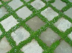 I like this idea...it breaks up the mundane stone patio...adds green to pallette...will this work in florida?...maybe substitute grass with _______?...Think of a looser arrangement or organization of pavers...