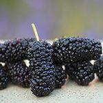 Jedna z možností, ako množiť stromy a rastliny s malými semenami - OZ Biosféra Fruit, Food, Meal, The Fruit, Eten, Meals
