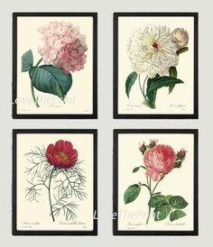 BOTANICAL Print SET of 4 Art Print  Beautiful Antique Hydrangea Peony Rose White Pink Spring Summer to Frame Illustration Home Decor