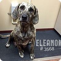 Eleanor - URGENT - Alvin Animal Adoption Center in Alvin, Texas - ADOPT OR…