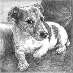 """I've got my eye on you""  ~ feisty little Jack Russell.  My daughter gave me this print by local artist E Morris Hecht. Love it."