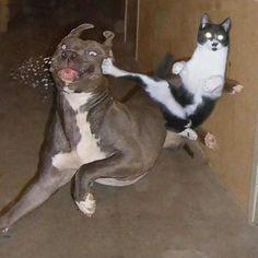 退かぬ!媚びぬ!省みぬ!ニャン術を使いこなす忍者猫たちの面白画像 : カラパイア