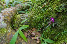 Rainforest flower