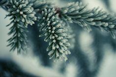 Frosty Christmas tree.