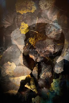 Spirit of autumn II. Photography For Sale, Fine Art Photography, Double Exposure, Spirit, Colours, Autumn, Prints, Painting, Art Photography