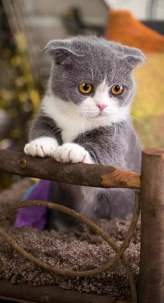 Kittens Cutest, Cats And Kittens, Ragdoll Cats, Animals And Pets, Cute Animals, Cute Baby Videos, Cat Boarding, Fluffy Cat, Beautiful Cats