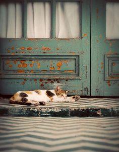 Cat Nap by Thorsten Becker