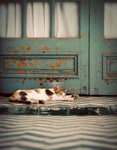 Cat:Nap by Thorsten Becker, via Flickr