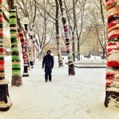 Tree socks in the snow. So pretty!