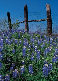 RV through Texas Hill Country